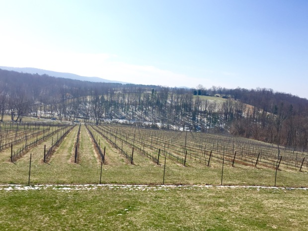 Cana Vineyards
