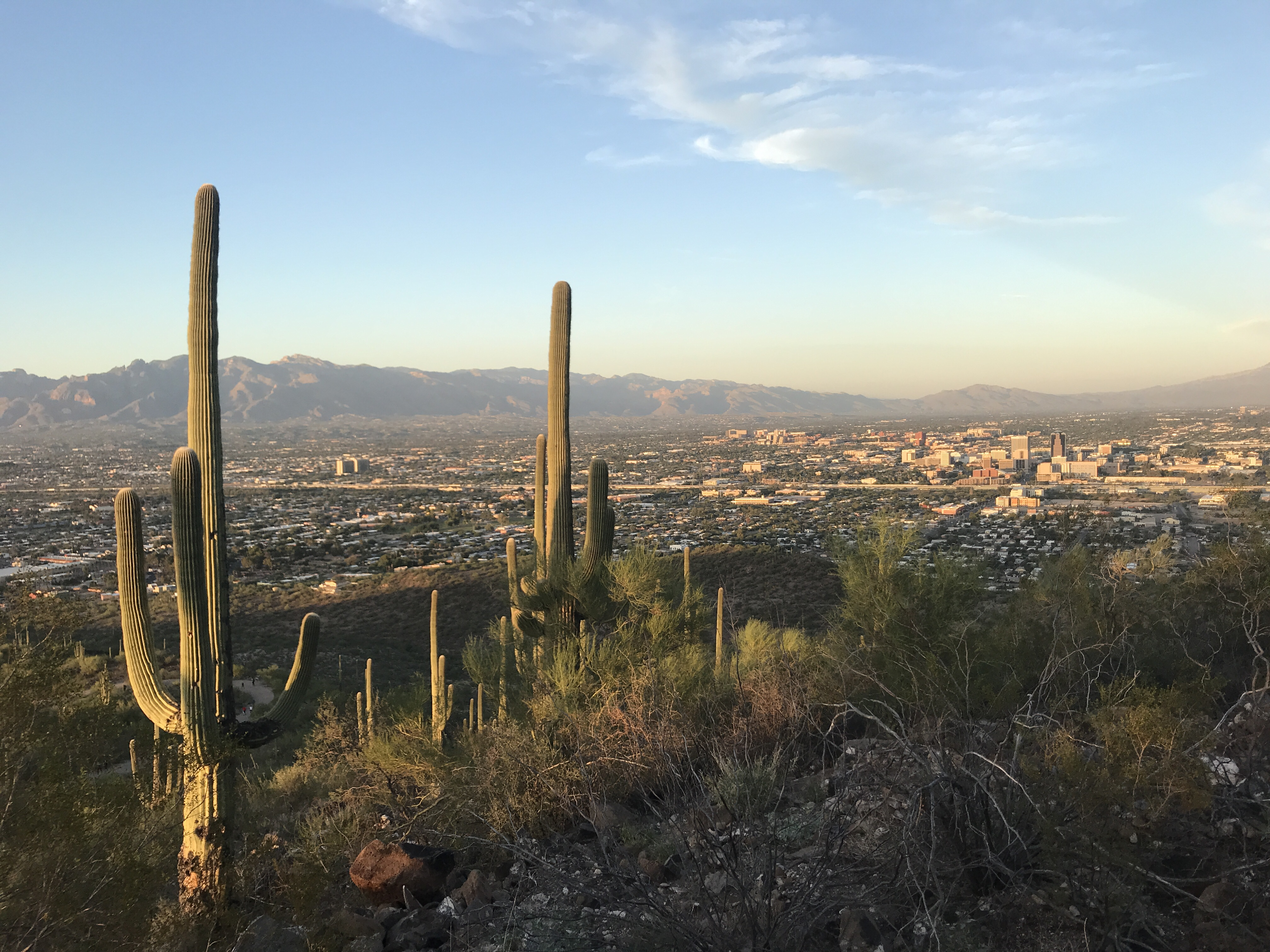 View from the top of our hike at Tumamoc Hill in Tucson, Arizona